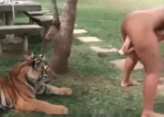 Sexy blondie is jerking off a tiger's penis