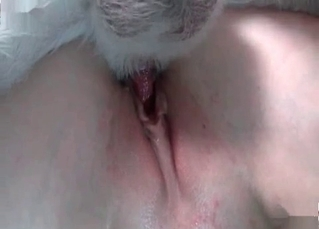 Her bald pussy gets licked by her puppy